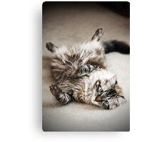What a Lazy Feline.... Canvas Print
