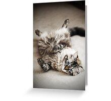 What a Lazy Feline.... Greeting Card