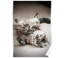What a Lazy Feline.... Poster
