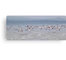 Take Off !  Flamingos at Lake Nakuru, Kenya Canvas Print