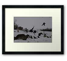 Chasing Ravens #1 Framed Print