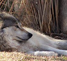 Lazy Day by Sandra Pham