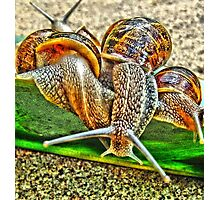 Snail Party Photographic Print