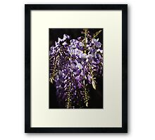 Natural Wisteria Bouquet  Framed Print