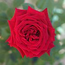 Red Heart by Barham Ferguson