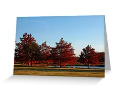 Row of Cypress in the Autumn Afternoon Sun Greeting Card