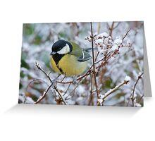 Great tit on frosty morning, County Kilkenny, Ireland Greeting Card