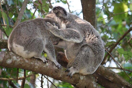 Loving Koala Mum & Bub In Our Trees by aussiebushstick