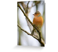 Chaffinch, The Rower, County Kilkenny, Ireland Greeting Card
