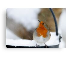 I didn't see that in the forecast! Robin in a snowstorm, County Kilkenny, Ireland Canvas Print