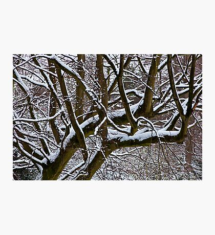 Snow covered tree Photographic Print