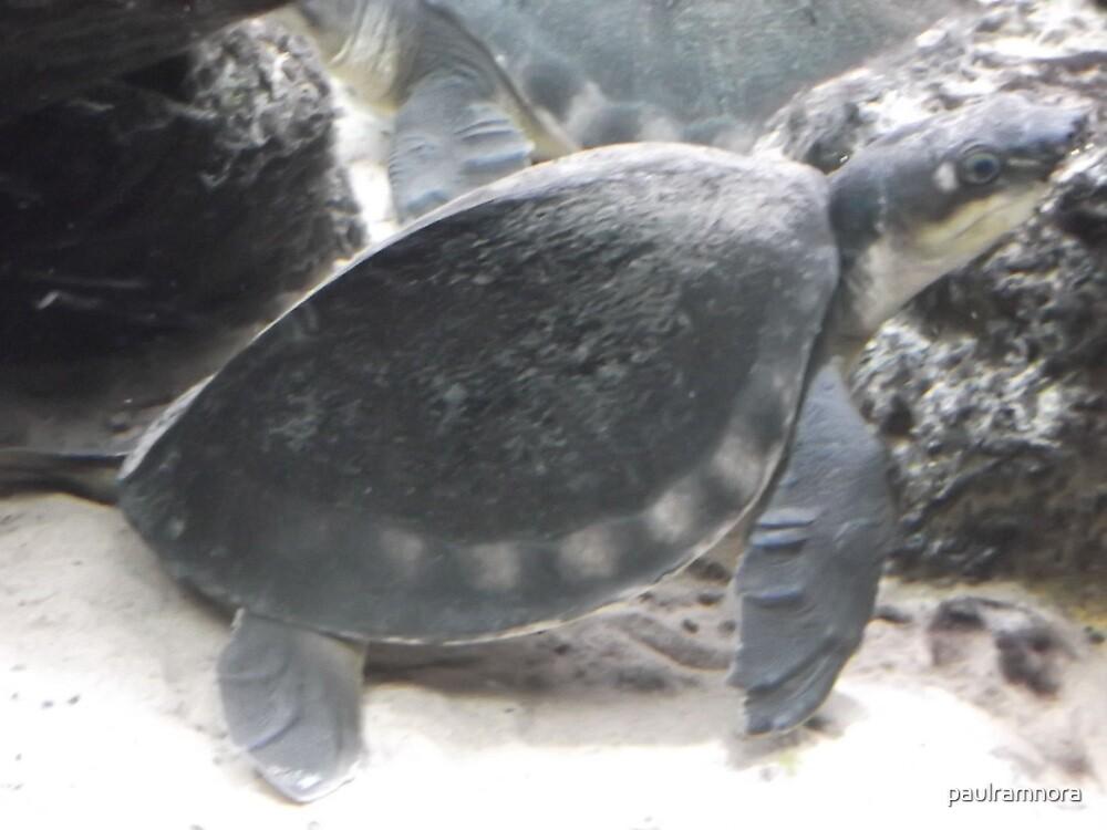 London Zoo/Reptile House/Turtle/(2 of 2) -(190212)- digital photo by paulramnora