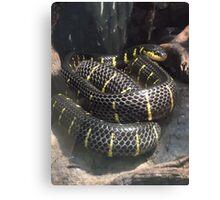 London Zoo/Reptile House/Snake(1 of 2) -(190212)- digital photo  Canvas Print