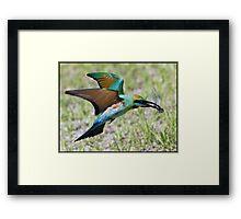 Rainbow Bee-Eater 74 Framed Print