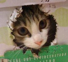 Alfie in a milkbox by Arianey
