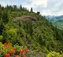 A Spot To View by Charles & Patricia   Harkins ~ Picture Oregon