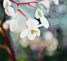 White Orchid by Mr T
