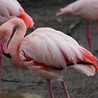 Red Flamingo by karina5