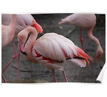 Red Flamingo Poster