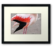 Fine Feathers Make Fine Birds - Guess Who I Am! Framed Print