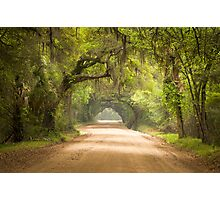Charleston SC Edisto Island Dirt Road - The Deep South Photographic Print