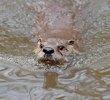 Coming In For A Closer Look by Kathy Baccari