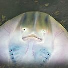 Sting Ray or Alien ? by Bine