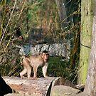 Sad Monkey by Vac1