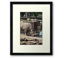 Rhinoceros drinking water Framed Print