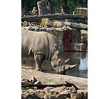 Rhinoceros drinking water Photographic Print