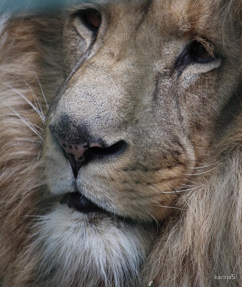 Lion King - Her Majesty  by karina5