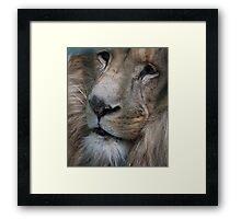 Lion King - Her Majesty  Framed Print