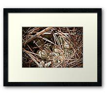 Pheasant Eggs Framed Print