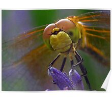 Face of a Dragon Fly Poster