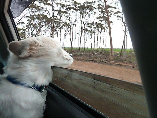 I'm Enjoying The Breeze by joycee