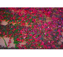 Wall of Fall  Photographic Print