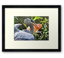Great Blue Heron & The Carp Framed Print
