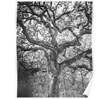 Nature: Tree Of Life Poster