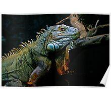 Sleepy Dinosaur Poster