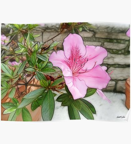 Pink Azaleas 1 Enhanced Poster