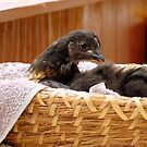 Hey!! I'm A Gift In A Basket... Chick - NZ by AndreaEL