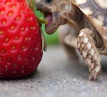 A Turtle Love Affair Sticker