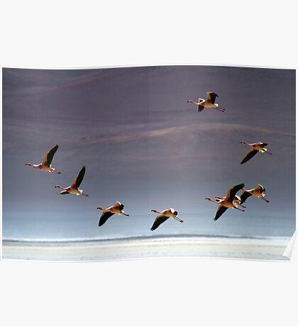 Flamingos, Atacama Desert, Chile Poster