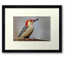 Happy Red Belly Framed Print