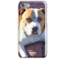 Pitbull on a couch iPhone Case/Skin