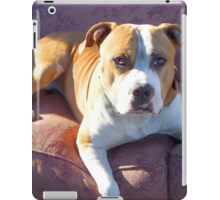 Pitbull on a couch iPad Case/Skin