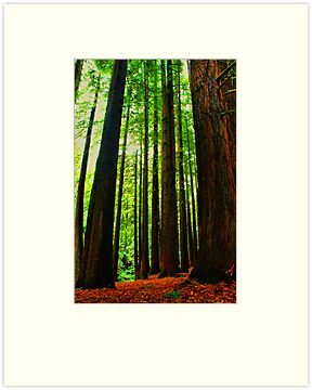Redwoods Forest  by KeepsakesPhotography Michael Rowley