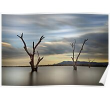 Three Dead Trees - Lake Fyans The Grampians Poster
