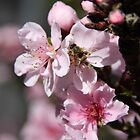Busy Bee in the Peach Tree! by Heather Friedman