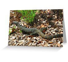 Goanna  Greeting Card